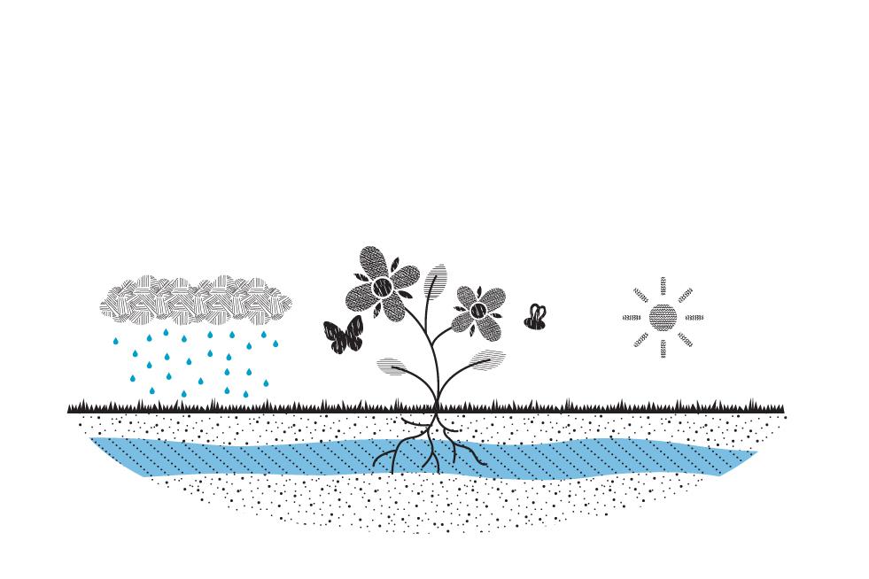 afbeelding biodiversiteit